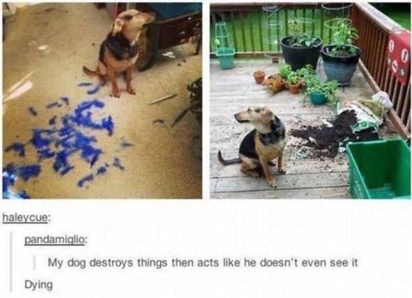 tumblr-funy-dog-100715-5-min