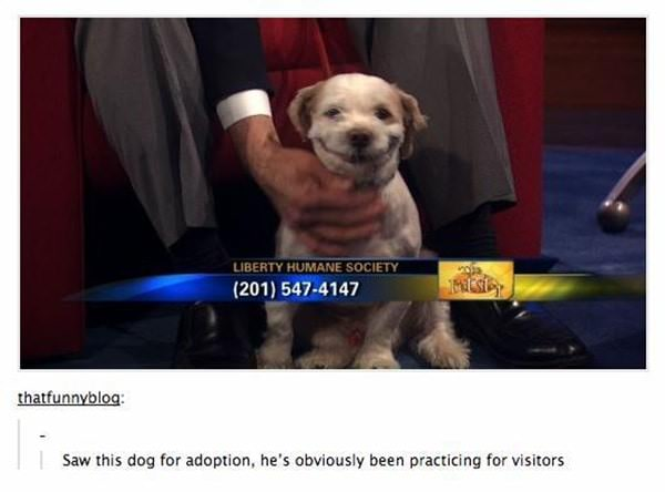 tumblr-funy-dog-100715-6-min