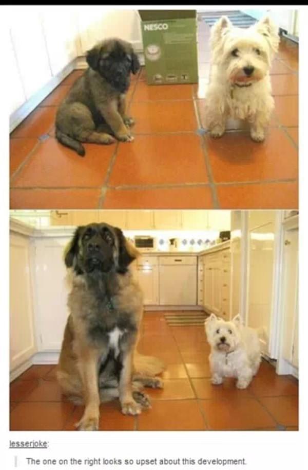 tumblr-funy-dog-100715-7-min