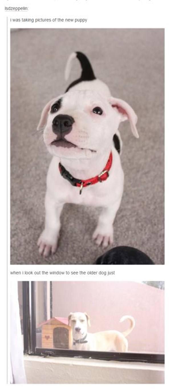 tumblr-funy-dog-100715-8-min