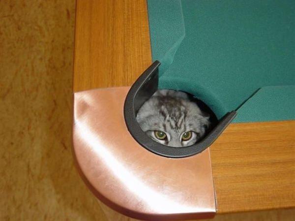 sneaky-ninja-cat-11