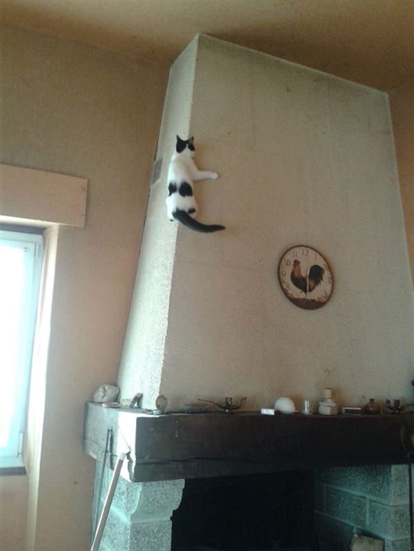 sneaky-ninja-cat-14