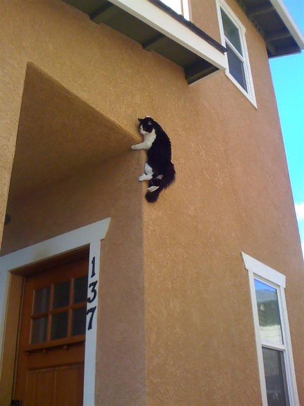 sneaky-ninja-cat-2