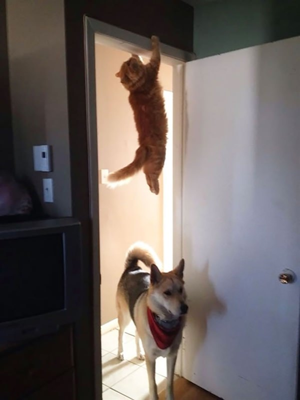 sneaky-ninja-cat-3