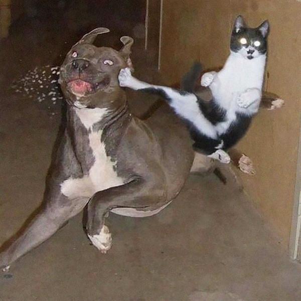 sneaky-ninja-cat-6