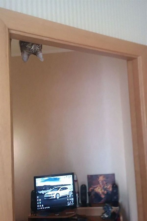 sneaky-ninja-cat-7