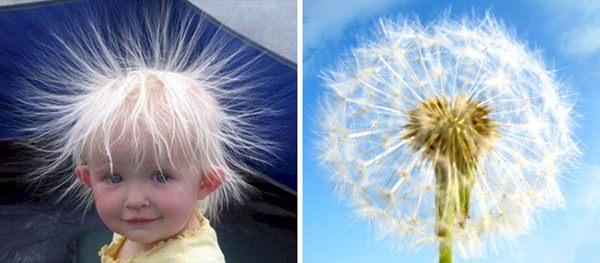 things-that-look-alike-091015-27
