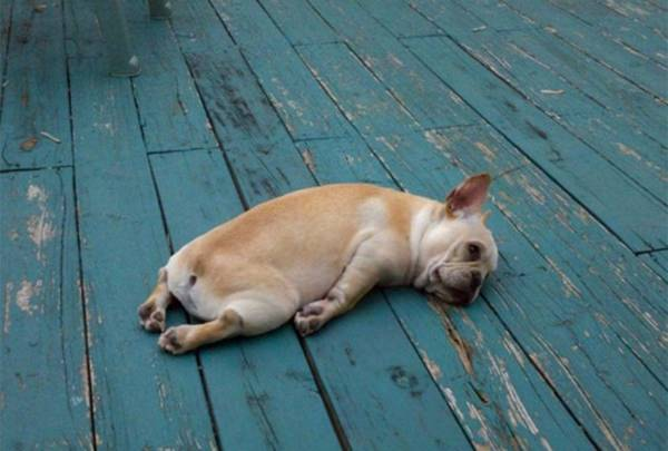 25 Animals With Hangover