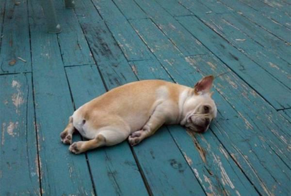 animal-hangover-011016-20