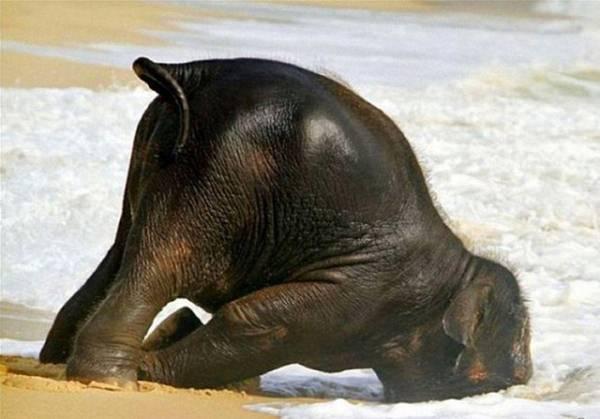 animal-hangover-011016-7
