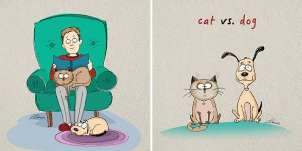 difference-cat-vs-dog-011016-1