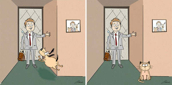 difference-cat-vs-dog-011016-2