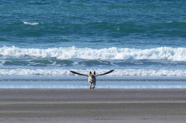 perfectly-timed-photo-092015-27