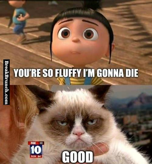 Just grumpy cat being grumpy