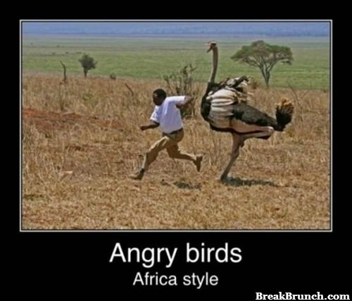 Angry bird African style