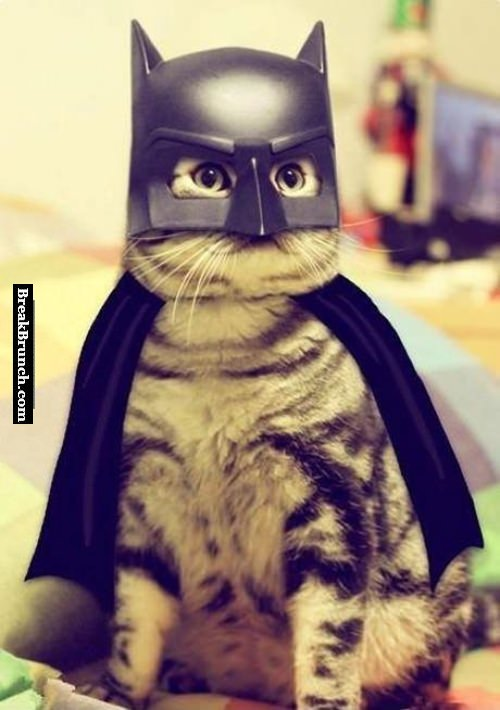 The Batcat