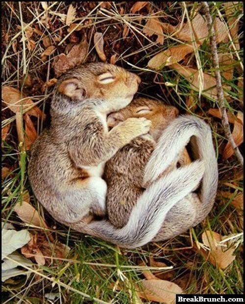 Two squirrels cuddling