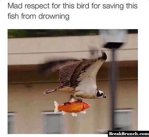 Bird saved fish from drowning