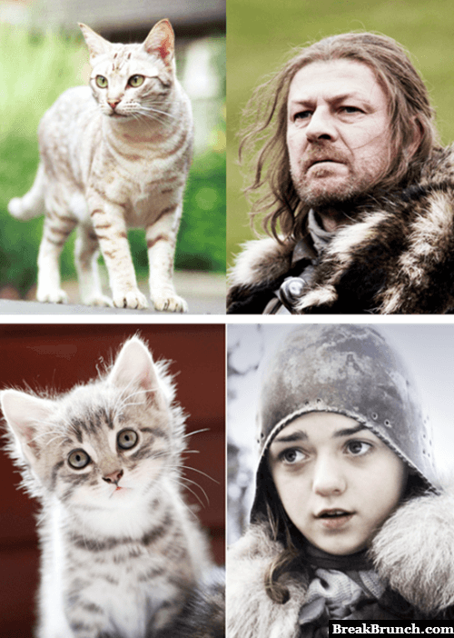 Game of Thrones and cats