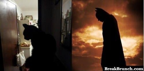 My cat totally looks like Batman