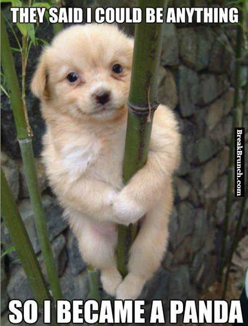 He is a cute little panda