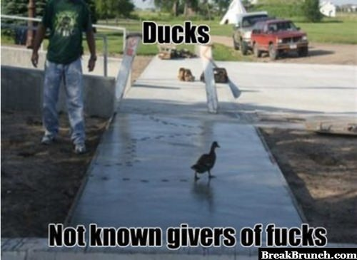 Duck doesn't give a f*ck