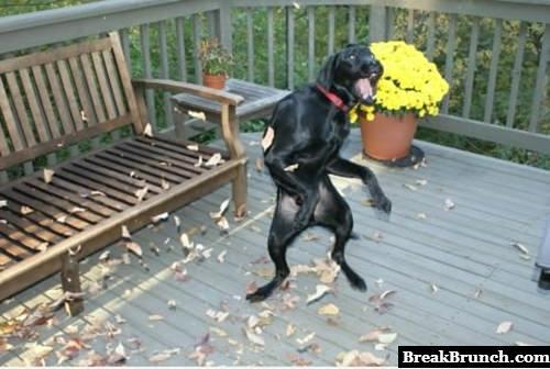 How do dog dances