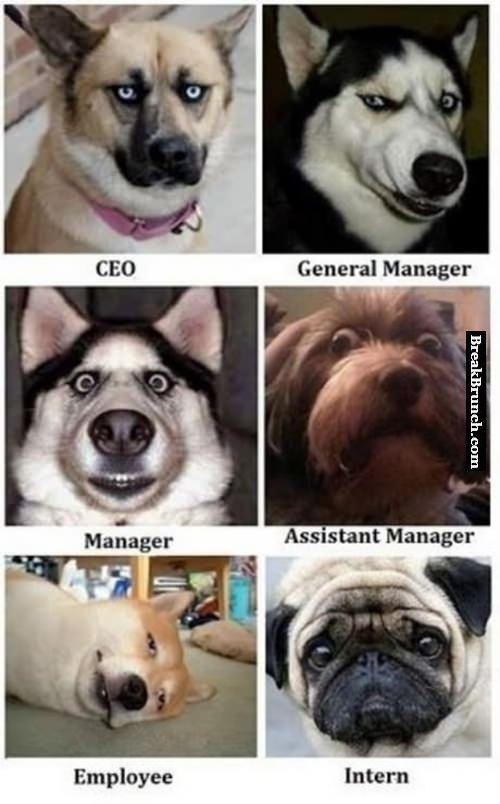 Role of employee as dog in company