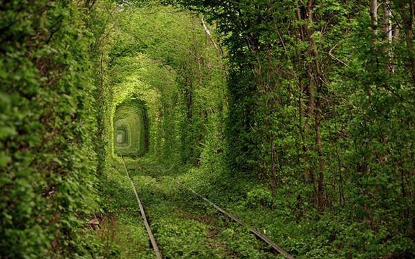 Fairy-Tale-Tunnel-of-Love-Found-in-Klevan-Ukraine-5