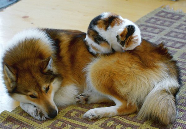 cat-and-god-are-friends-20150902-17