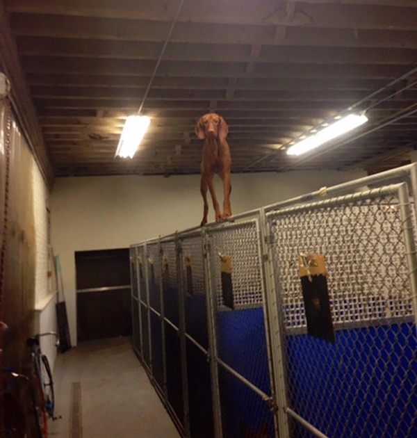 dogs-who-made-poor-life-choices-20150902-13