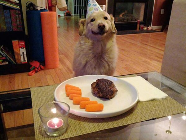 happiest-dogs-who-show-the-best-smiles-20150902-13