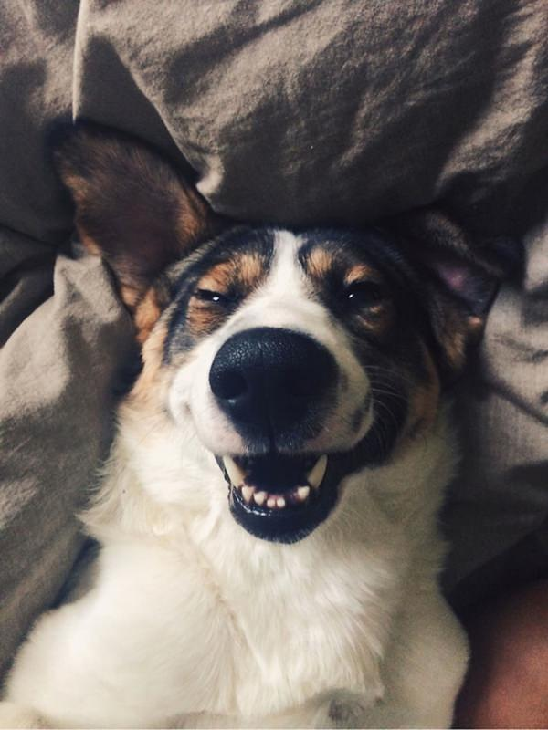 happiest-dogs-who-show-the-best-smiles-20150902-15