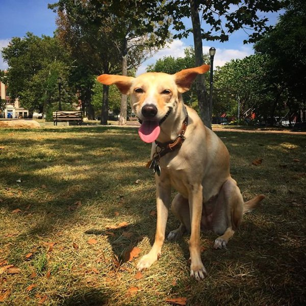 happiest-dogs-who-show-the-best-smiles-20150902-19