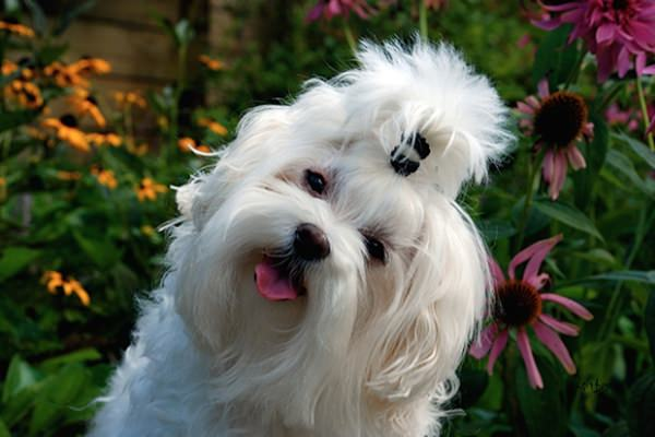 happiest-dogs-who-show-the-best-smiles-20150902-20