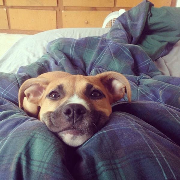 happiest-dogs-who-show-the-best-smiles-20150902-8