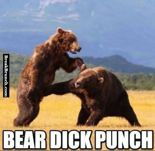 Bear d*ck punch