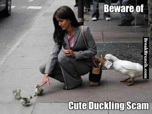 Beware of cute duckling scam