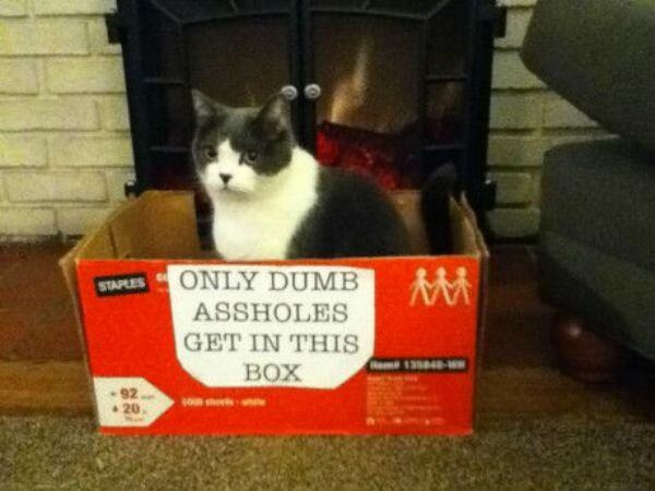 catch-cat-with-box-20151008-13