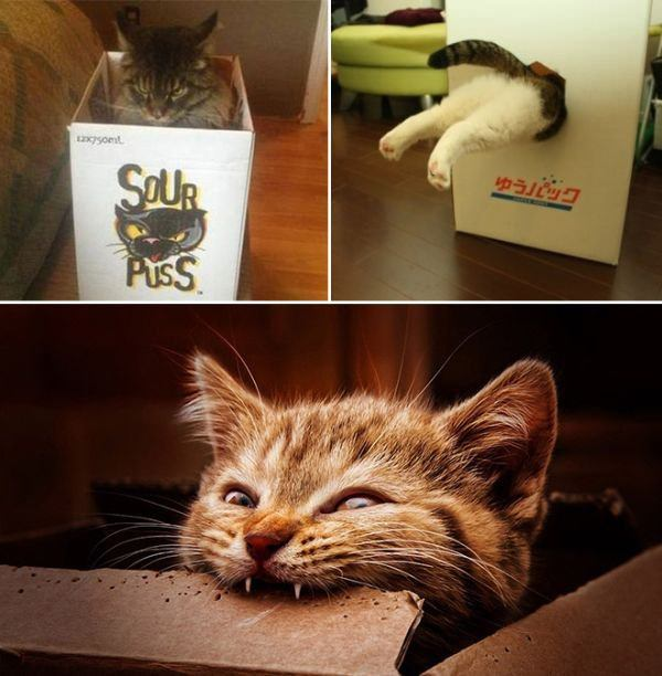 catch-cat-with-box-20151008-2
