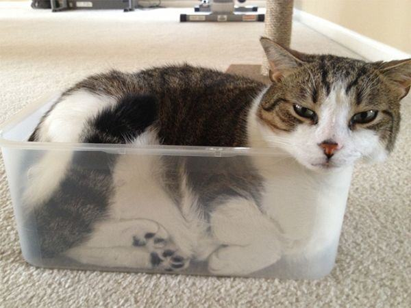 catch-cat-with-box-20151008-4