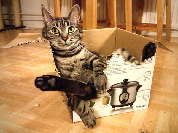 catch-cat-with-box-20151008-7