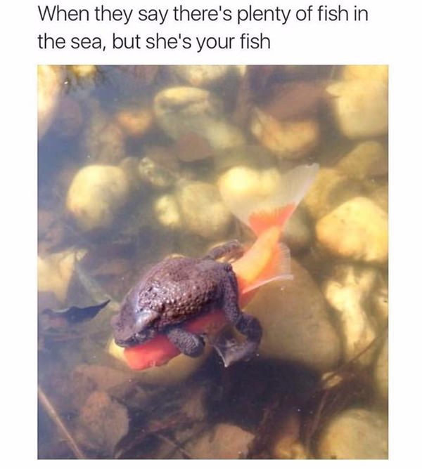 funny-meme-pic-20151005-14