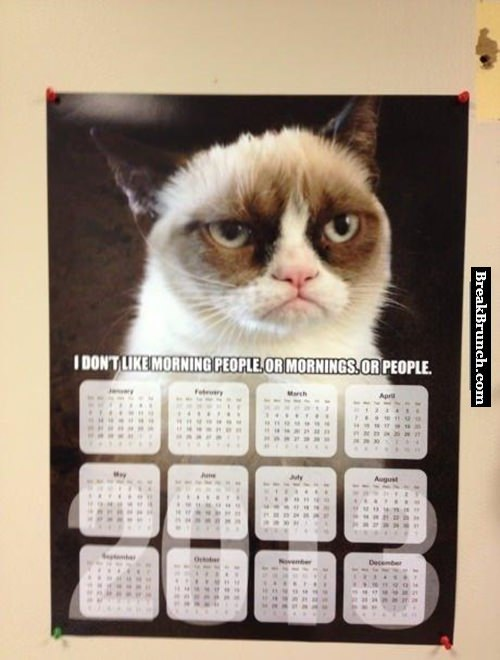 Grumpy cat doesn't like anything