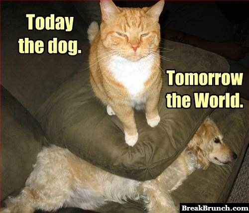 Cat has an evil plan to take over the world