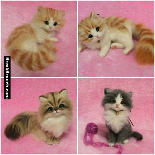 What breed are these cats, so cute