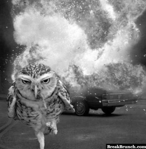 Badass owl