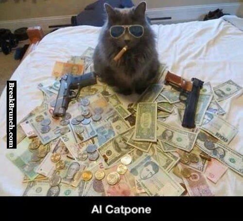 AI Catpone