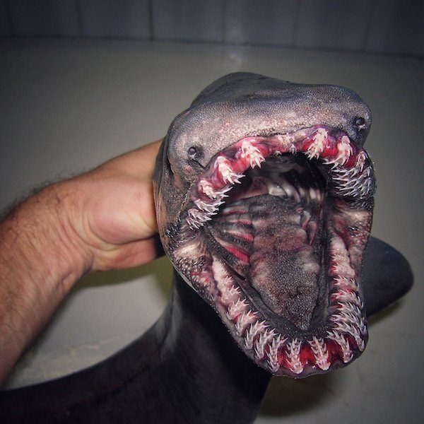 deep-sea-creature-20151223-1