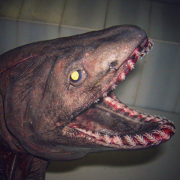 deep-sea-creature-20151223-16